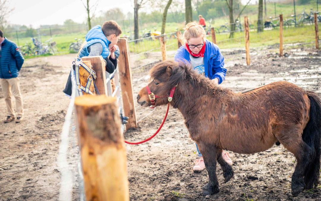 De pony's moeten even terug op stal